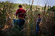 A Serbian family collects vegetables in their farm land above the Serbian enclave of Velika Hoca, Kosovo. August 2010.