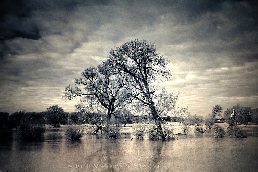 Two trees on the flooded river banks of the Rhine