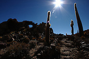 Cacti on Isla Incahuasi, in the middle of the Salar de Uyuni, the largest salt flat in the world, high up on the Bolivian Altiplano at about 3,600m above sea level