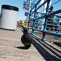 Photographs taken on the streets of Santa Monica, California