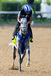 Derby 142 hopeful Mohaymen with Miguel Jaime up were on the track for training, Monday, May 02, 2016 at Churchill Downs in Louisville.