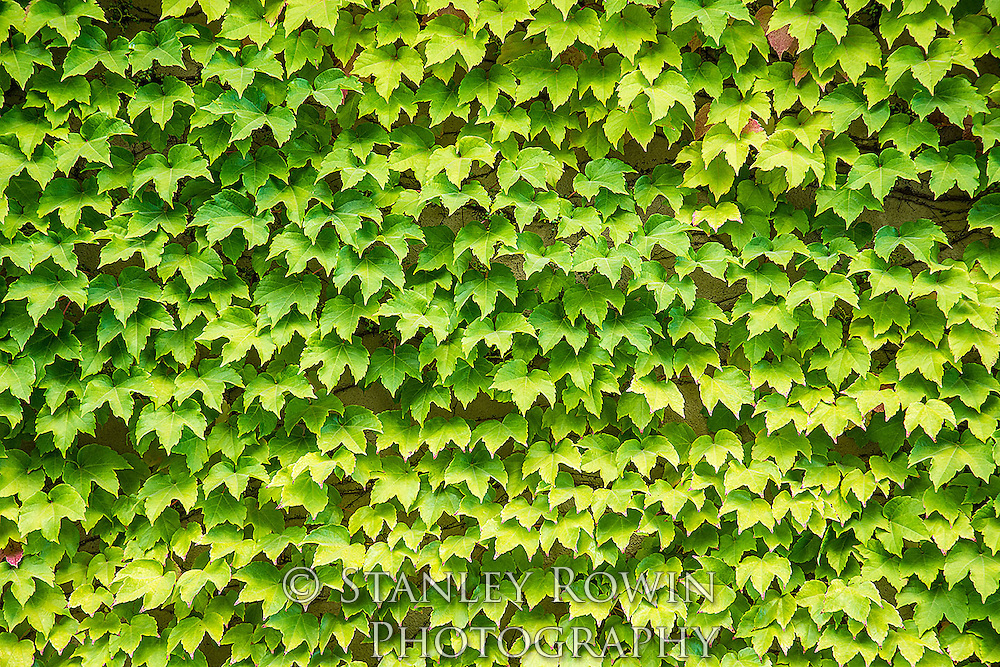 Leaf, Patterns, Nature, Green, wall, Leaves