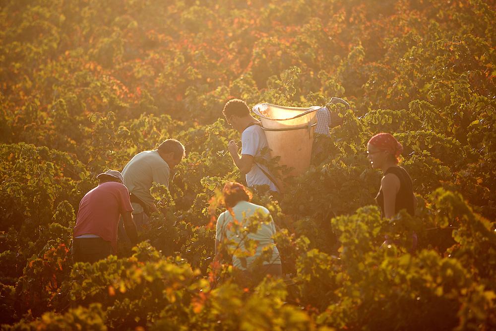 24/09/09 PAZIOLS (FRANCIA). Aurelio y Josefa, junto con sus cuatro hijos, son el vivo ejemplo del inmigrante de Alcalá del Valle, un pequeño pueblo gaditano enclavado en una hondonada, dónde más de medio millar de sus 5.300 habitantes se ausenta durante meses para trabajar de temporeros a las órdenes de un patrón en los campos de la región francesa del Languedoc-Roussillon. Vayan dónde vayan, siempre se les ve unidos..FOTO: TONI VILCHES.