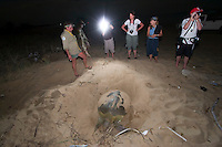 Volunteer ecotourists watching a female turtle dig a nest in which to lay her eggs on a remote beach on the west coast of Cape York in far northern Australia..