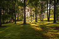 An early morning photo of sunlight streaming through the trees at Meadowlark Botanical Garden.