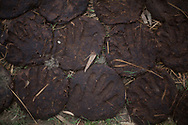 Cow dung patties are set to dry on a wall to use as fuel in village in Indroprastha, West Bengal, India Thursday, Oct. 4, 2012 (Photo/Elizabeth Dalziel for Christian Aid)