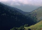 Big Sur, Sunlight, Fog, Ocean, Forest, Pacific Ocean, Ocean, California