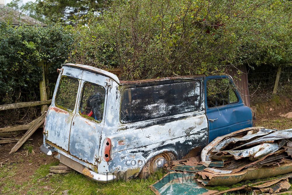 Abandoned rusty old van with tree growing through it on a farm in Herefordshire, UK