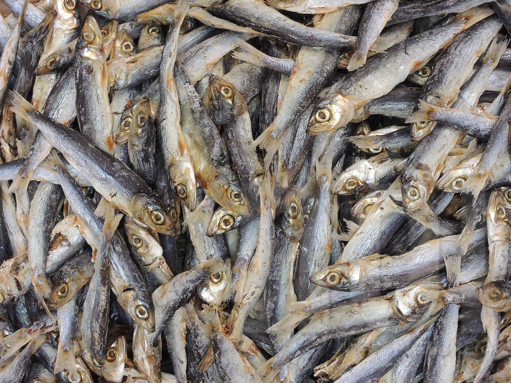 Detail of small dried fish for sale at a Hanoi market, Vietnam, Southeast Asia