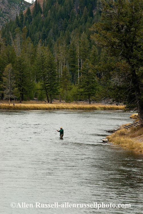 Fly Fisherman, Madison River, west of Madison Junction, Yellowstone National Park