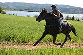 Hest - horse - Selbu
