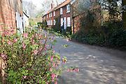 View down a quiet village lane in spring Shottisham, Suffolk