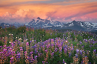 Summer thunderstorm over Mount Shuksan at sunset, seen from wildflower meadows on Skyline Divide, Mount Baker Wilderness Washington
