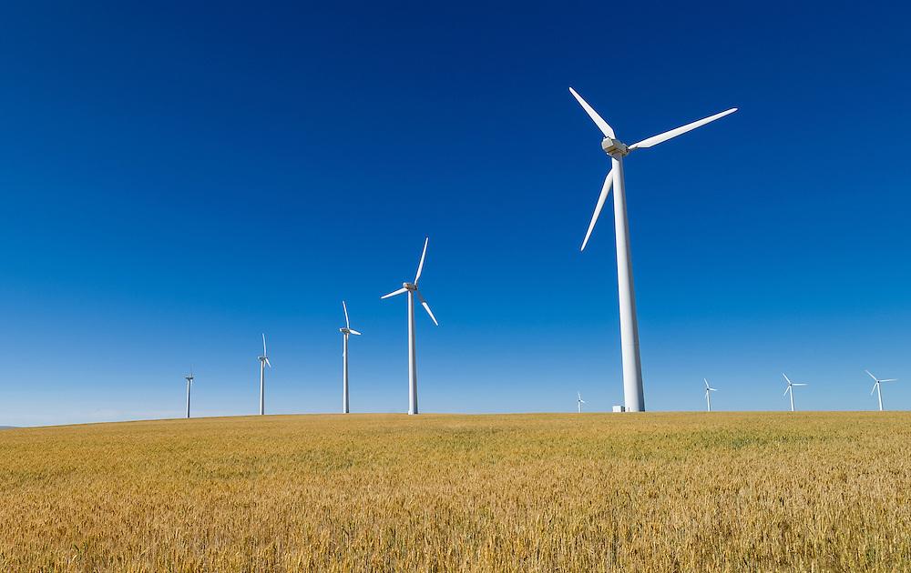 Electricity-generating wind turbines in wheat field near Condon, Oregon.