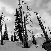 Ghost trees before sunrise in Glacier National Park.