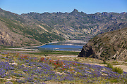 Views of Spirit Lake and wildflowers along the Loowit Trail at Mount St. Helens.<br /> <br /> Mike Siegel / The Seattle Times