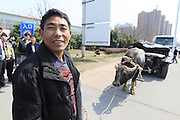 HEFEI, CHINA - MARCH 13: (CHINA OUT) <br /> <br /> Car Owner Hires Buffalo Pulling BMW Car For Rights Protection<br /> <br /> A buffalo pulls a crashed BMW 7 Series car in front of a BMW 4S store on March 13, 2014, in Heifei, Anhui Province of China. The airbag of a nearly 800, 000 CNY (more than 130, 000 USD) BMW 7 Series car failed to deploy during an traffic accident last year. But the dealer did not reach an compensation agreement with the car owner which made the car owner hire a buffalo to pull the crashed car in front of the 4S store for rights protection. <br /> ©Exclusivepix
