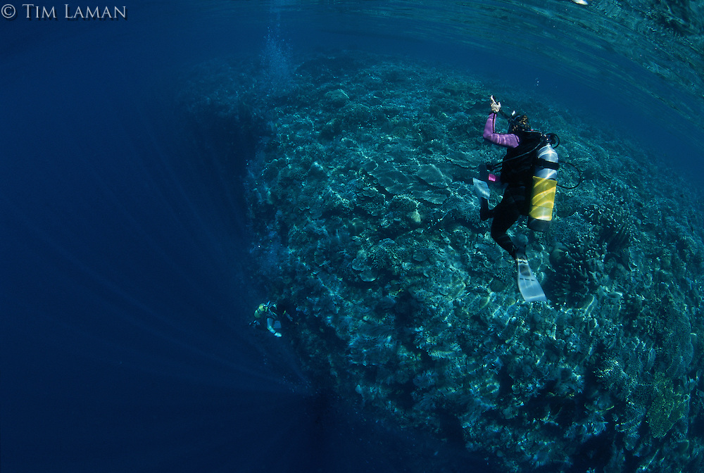 A diver descends a coral covered wall off of Manado Tua.