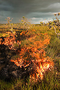 Fire in Savannah<br /> Rupununi<br /> GUYANA<br /> South America
