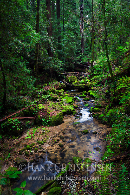 Waddell Creek flows through a green forest along the Berry Creek Falls trail, Big Basin Redwoods State Park