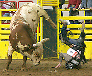 Fred Boettcher of Tomah, Wisconsin (R) is thrown on his head by Red Neck Outlaw (L) during the second round of the Professional Bull Riding competition at the National Western Stock Show in Denver January 11, 2005.  The National Western, now in its 99th year, attracts thousands of livestock growers and is one of the largest livestock exhibitions staged in North America.