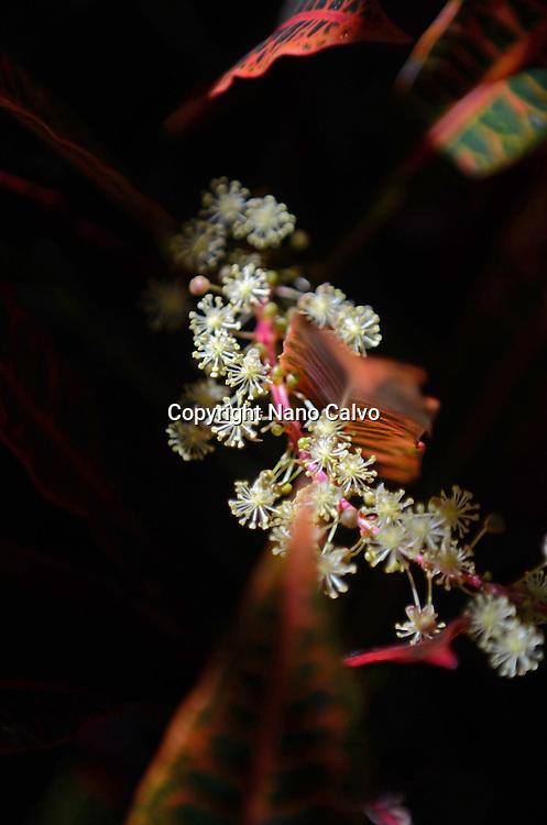 Close up of beautiful tropical plant, Tenerife