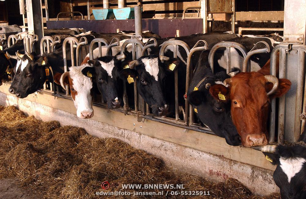 Zorgboerderij de Honspol Gooyerdijk 20 Driebergen, koeien, eten hooi,