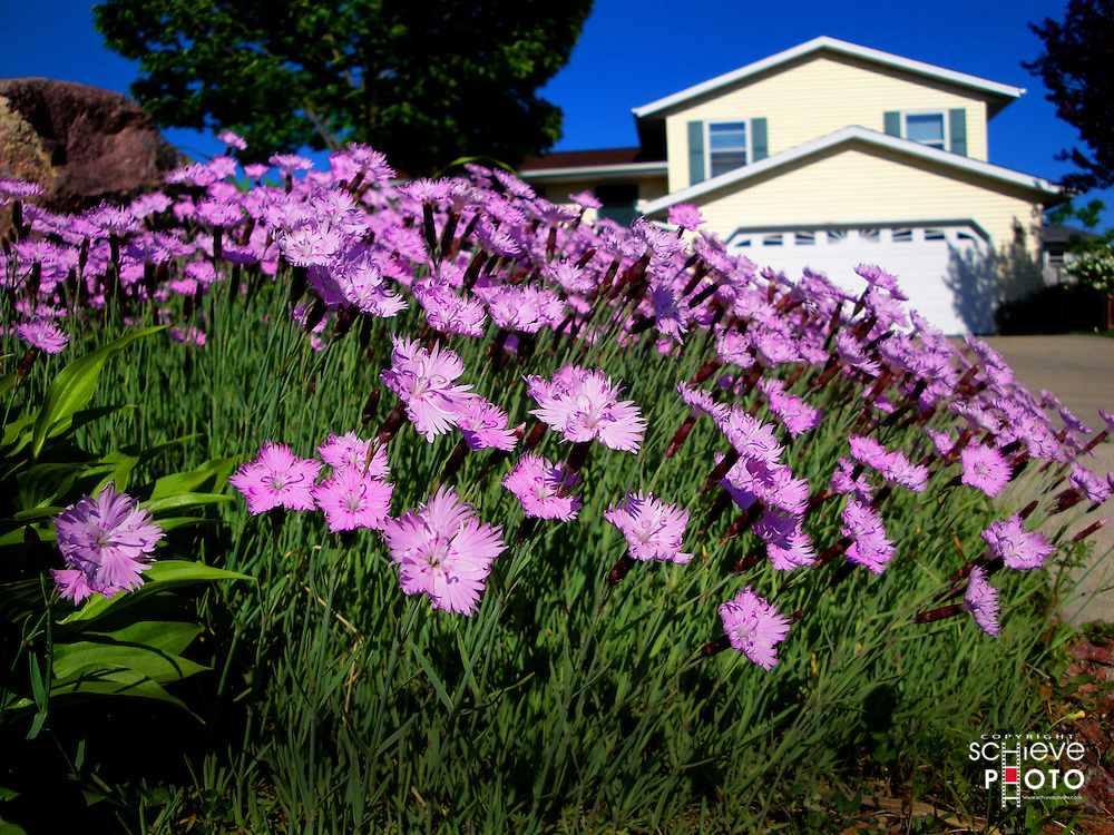 Flowers decorate a suburban home.