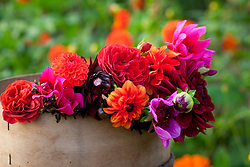 Bunch of dahlias gathered from the garden at De Boschhoeve