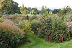 The garden at Marchants at dawn with the South Downs beyond. Borders packed with grasses and late flowering perennials