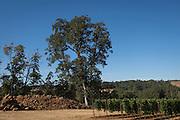 Mark Ryan vineyard source Eola-Amity Hills AVA, Willamette Valley, Oregon