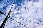 Two airplanes fly overhead, in a windswept cloudy blue sky, framed by powerlines.<br />