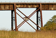 Salisbury Mills, New York - A wild turkey flies past the Moodna Viaduct railroad trestle on Oct. 14, 2012. ©Tom Bushey / The Image Works