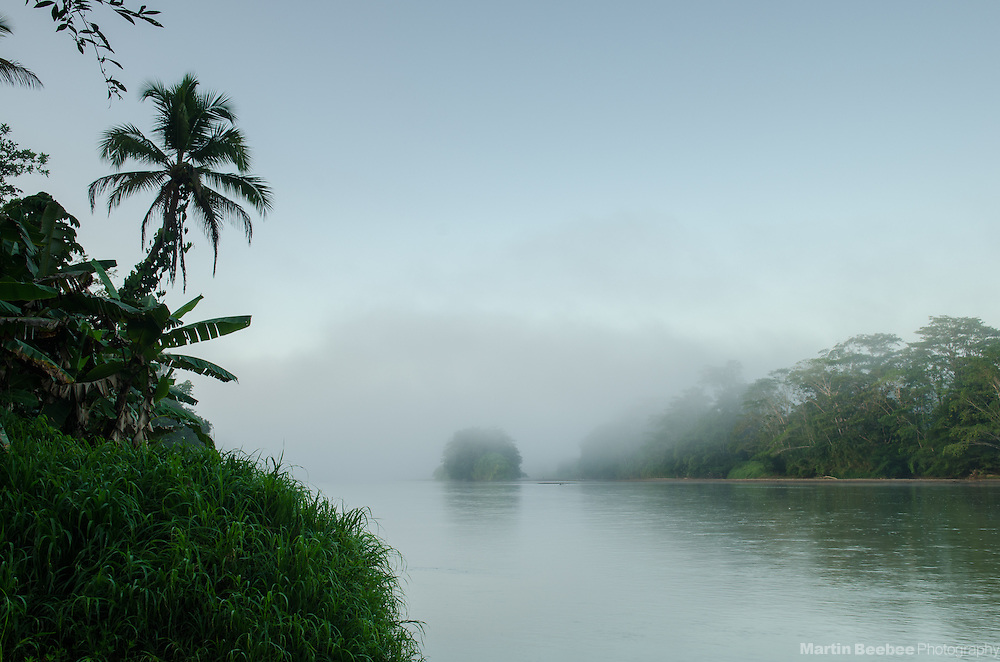 Palm tree and misty morning on the Rio San Carlos, Boca Tapada, Costa Rica