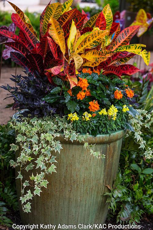 Container garden, croton, ivy, snapdragons, Garden, Houston, late summer, Texas.