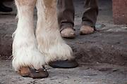 Close-up of horse legs.