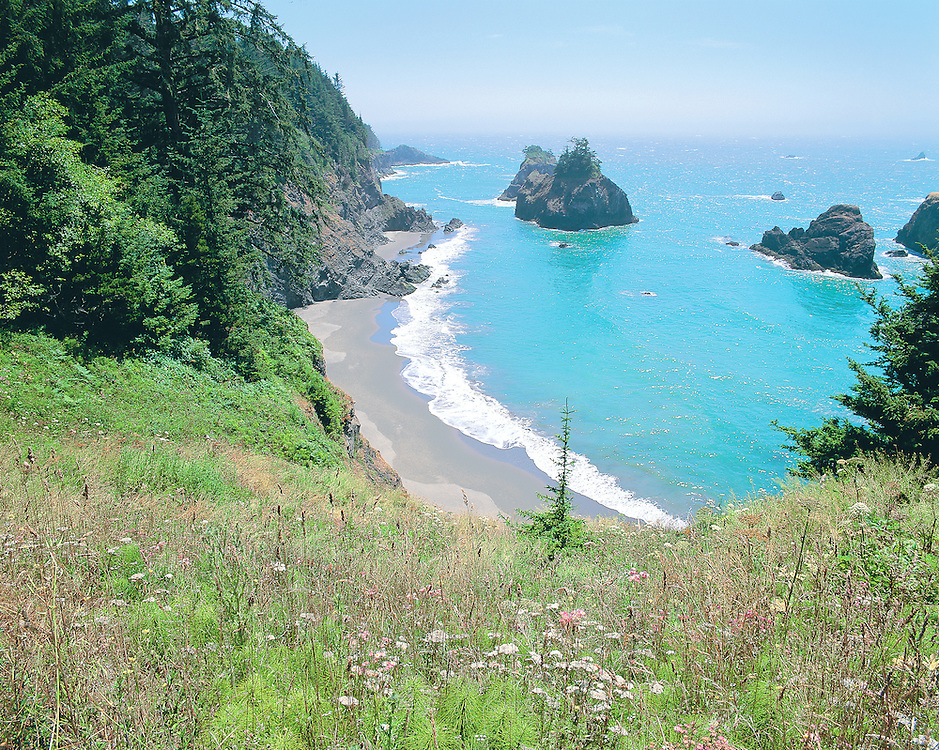 Grassy Meadow Above Beach at Boardman State Park, Oregon Coast