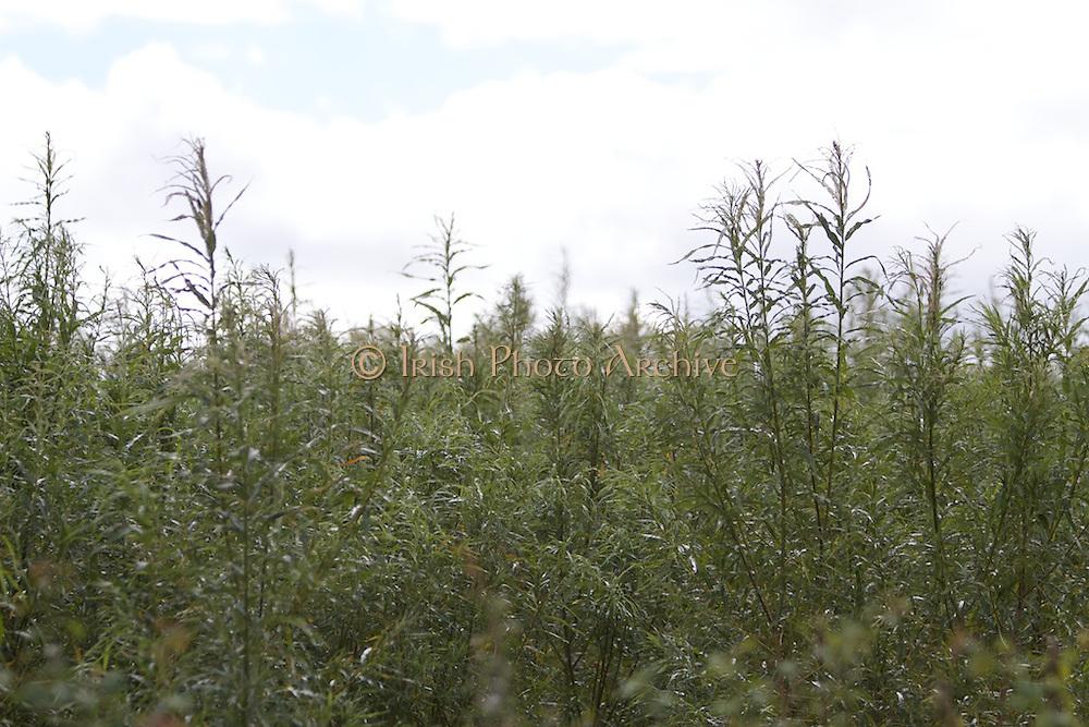 Irish Farm Crops