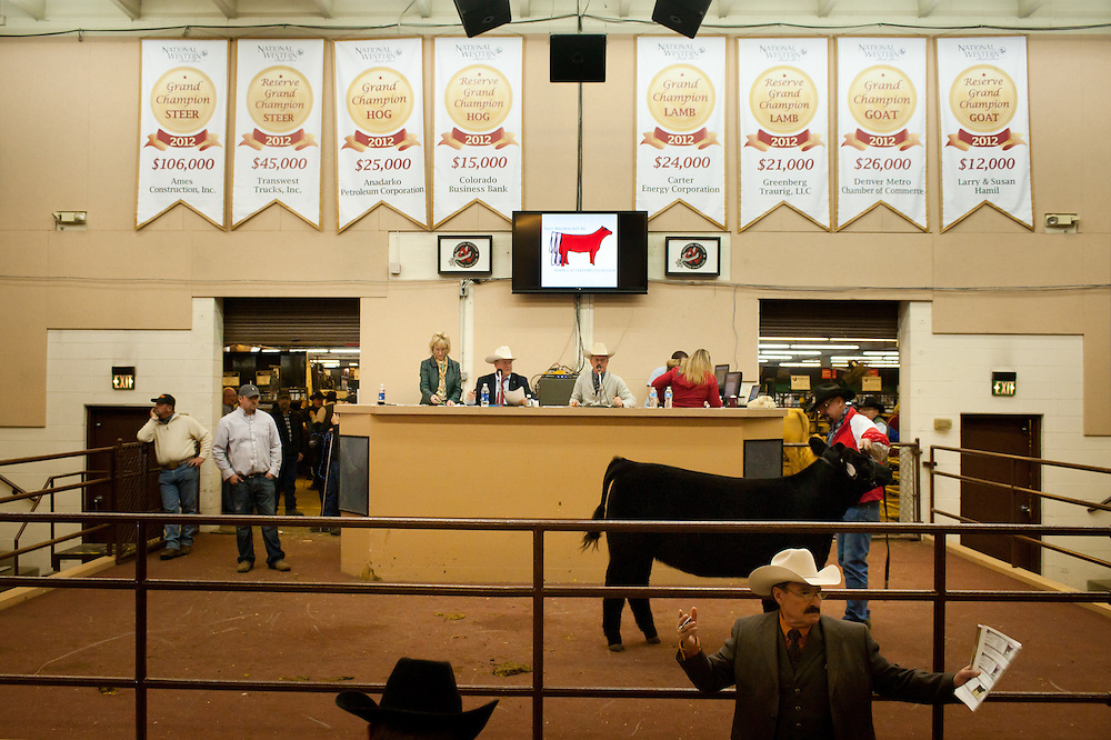 The Beef Palace, one of the auction venues at the National Western Stock Show. Banners on the wall list some of the top sale prices from last year's event.