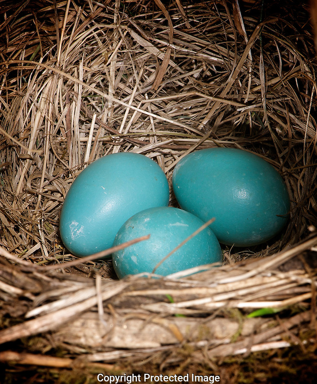 Robin's Nest., Courtenay, British Columbia, Canada, Photographer - Isobel Springett