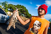 11 JANUARY 2007 - LEON, NICARAGUA: A man sells iguanas along the PanAmerican Highway near Leon, Nicaragua. Iguanas are a delicacy in Nicaraguan cuisine. They are served in a soup or fried. Photo by Jack Kurtz