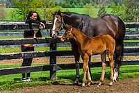 Throughbred mare and foal, Winstar Farm, Versailles (Lexington), Kentucky USA.