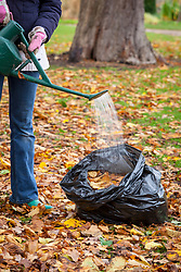 Making leaf mould using a bin bag - watering