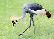 July 27, 2013: Oklahoma City Zoo