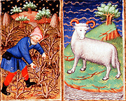 March. Astrological sign of Aries. Pruning. From the 'Bedford Hours', French 15th century illuminated manuscript.  British Library, London. (Detail)