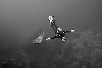 Marbled Ray and Diver