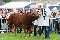 © Licensed to London News Pictures. 23/07/2018. Llanelwedd, UK. Contestants wait for judging in the cattle ring on the first day of the Royal Welsh Agricultural Show. The Royal Welsh Agricultural Show is hailed as the largest & most prestigious event of its kind in Europe. In excess of 200,000 visitors are expected this week over the four day show period. The first ever show was at Aberystwyth in 1904 and attracted 442 livestock entries. Photo credit: Graham M. Lawrence/LNP