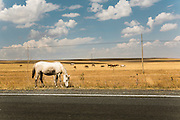 horses on the way to Ani