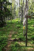 både Pilegrimsveg og turistline, på vegen fra Kubørgvegen til Roltdalen. Foto: Bente Haarstad Heggspinnmøll (Yponomeuta evonymella) er eit insekt, eit av 77 artar spinnmøll ( Yponomeutidae) i Noreg. Heggspinnmøllen er ein sommarfugl som lever i hegg i larvestadiet.