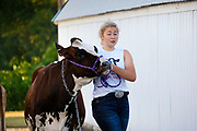 16 JULY 2020 - BOONE, IOWA: EMMA WIEBOLE, a 4H contestant, brings her dairy cow to the cow wash on the first day of the Boone County Fair in Boone. Summer is county fair season in Iowa. Most of Iowa's 99 counties host their county fairs before the Iowa State Fair. In 2020, because of the COVID-19 (Coronavirus) pandemic, many county fairs were cancelled, and most of the other county fairs were scaled back to concentrate on 4H livestock judging. Boone county scaled back its fair this year. The Iowa State Fair was cancelled completely. Boone County Emergency Management did not approve going ahead with the fair, and has advised anyone who goes to the fair to take precautions and monitor themselves for symptoms of the Coronavirus.             PHOTO BY JACK KURTZ